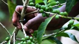 에티오피아 커피의 모든 것