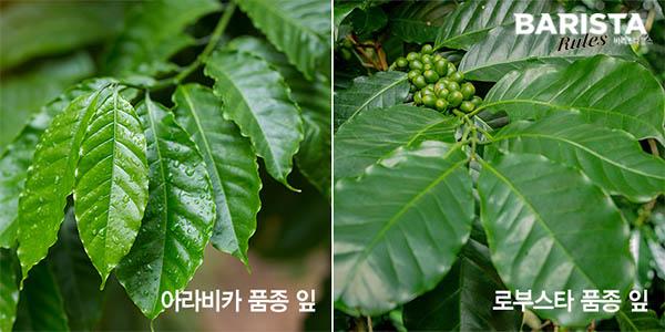 나뭇잎 사진
