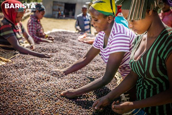 매일 바리스타룰스_여성 커피농부