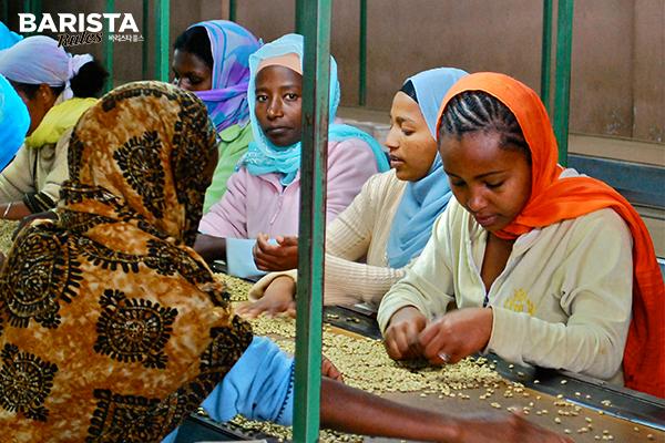 바리스타룰스 에티오피아 커피 농부