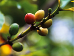 coffeeroad_ethiopia3_3