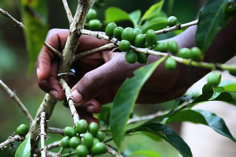 coffeeroad_ethiopia3_6